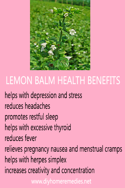 Richard Whelan ~ Medical Herbalist ~ Lemon Balm